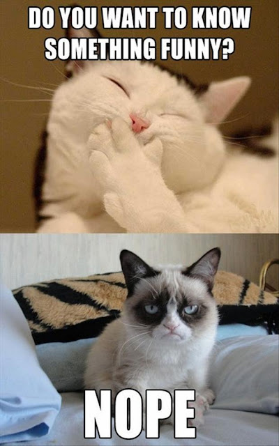 Funny Gifs and Cute Cats Pics to Make You Smile 1
