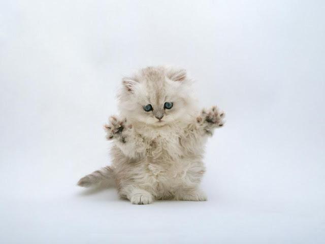 Mengenal Nama Nama Kucing Betina Beserta Artinya Ruberuky The Cat World