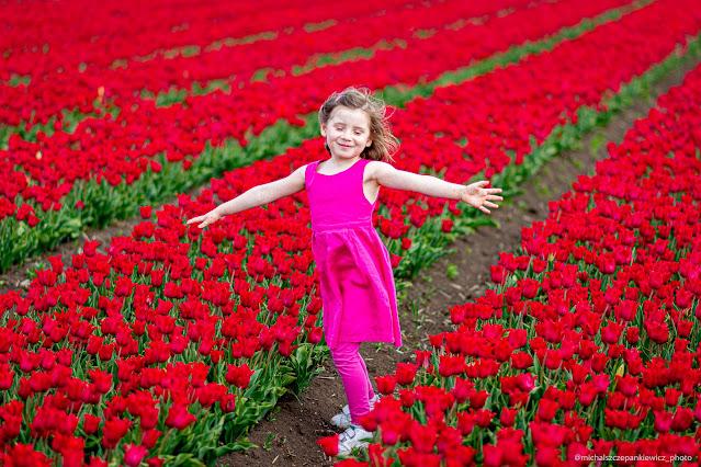 morze tulipanów - Mała Holandia