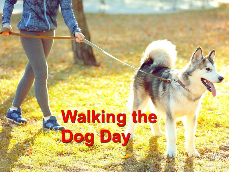 National Walking the Dog Day Wishes Sweet Images