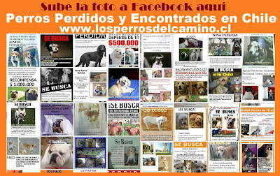 https://www.facebook.com/pages/Los-perros-del-camino/413718910520