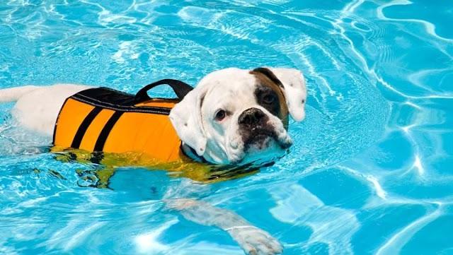 Αυτοί είναι οι σκύλοι που αγαπούν πολύ το νερό και την κολύμβηση