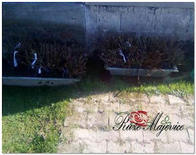 Isporuka ruža brzom poštom sirom Bosne i Hecegovine i Republike Srpske