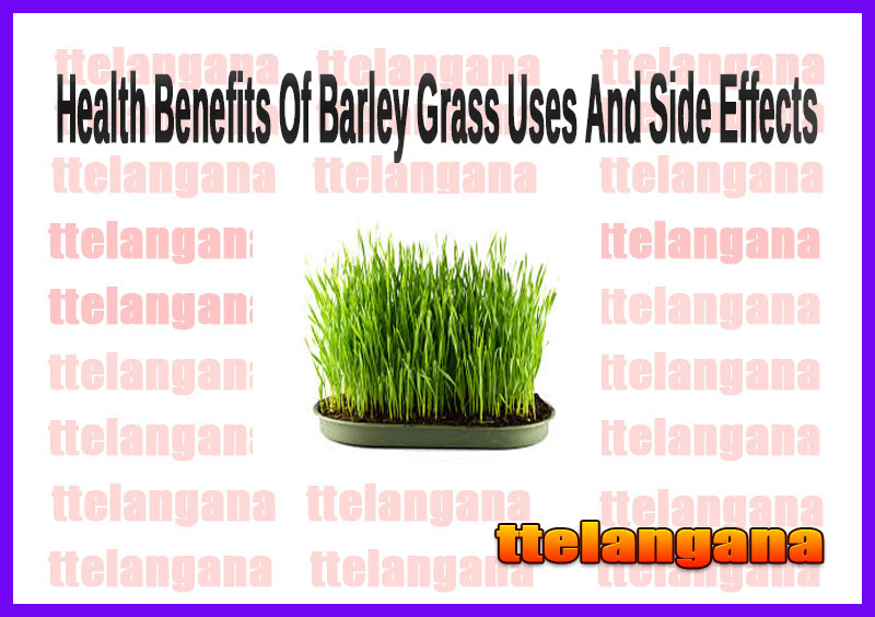 Health Benefits Of Barley Grass Uses And Side Effects