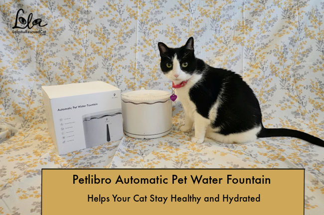 Petlibro Automatic Pet Water Fountain