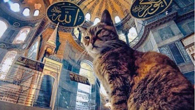 Gli Kucing Terkenal di Dunia