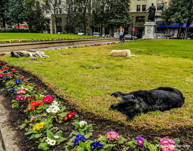 Cães de rua em Santiago do Chile