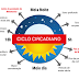 Proteína que mantém o relógio circadiano em funcionamento é detectada.