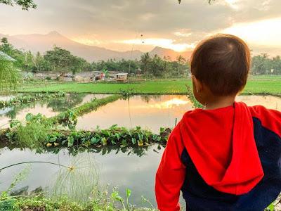 Pemandangan di Rummi Kopi Lan Tresna Kampoeng Banyumili