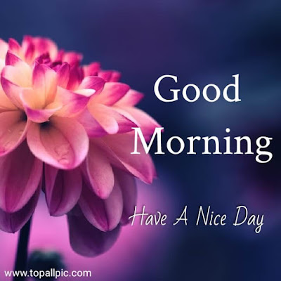 good morning images with flower for whatsapp