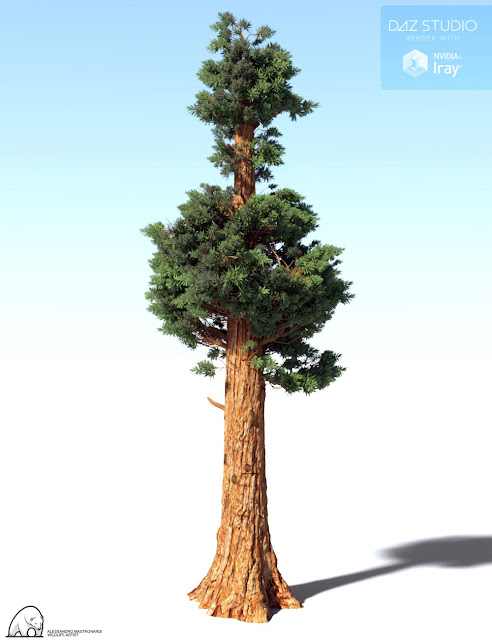 Giant Sequoia by AM