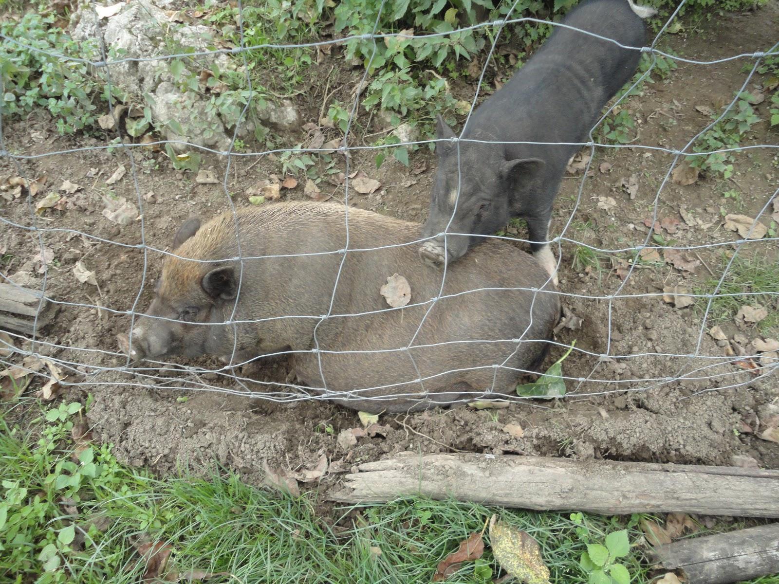 Bardo lusevera benecia dintorni news foto dal ranch di for Piccoli progetti di ranch