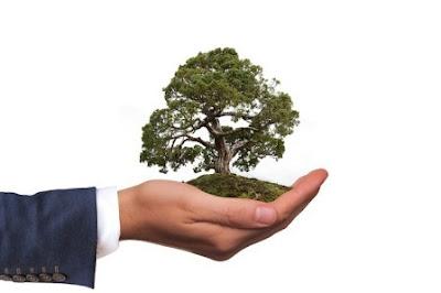 Care of bonsai tree