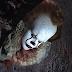 """Warner Bros. não tem planos para mais filmes de """"IT"""""""