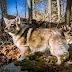 5 Rare and Beautiful Farm Dog Breeds