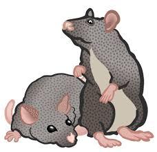 kahaniya-in-hindi-चूहों-के-सात-पूंछ।