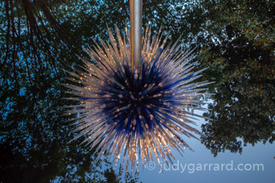 Chihuly Sapphire Star at ABG