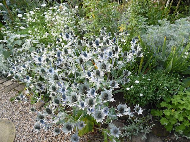 biało-szara rabata, ogród angielski