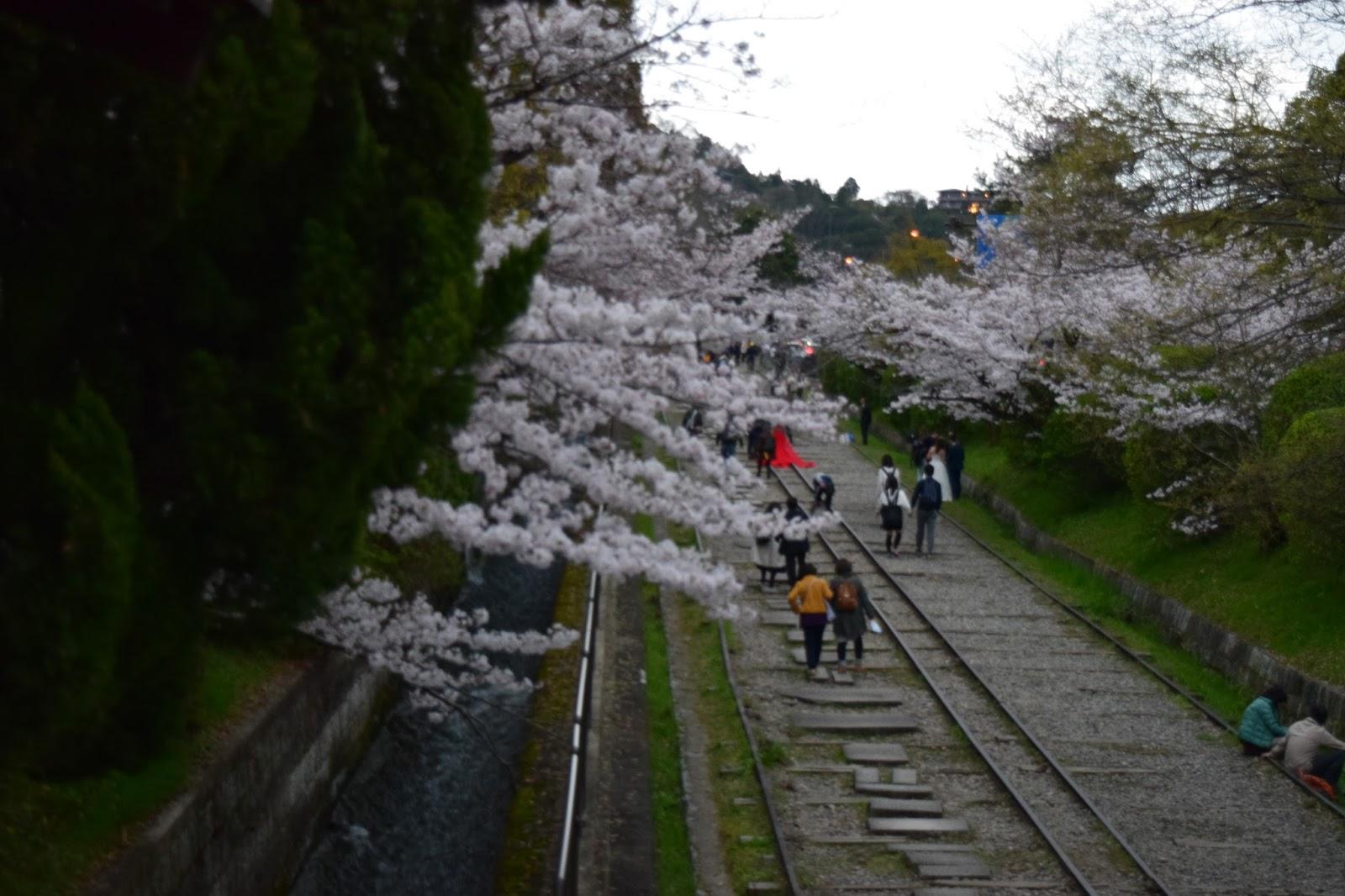 Keage cherry blossom
