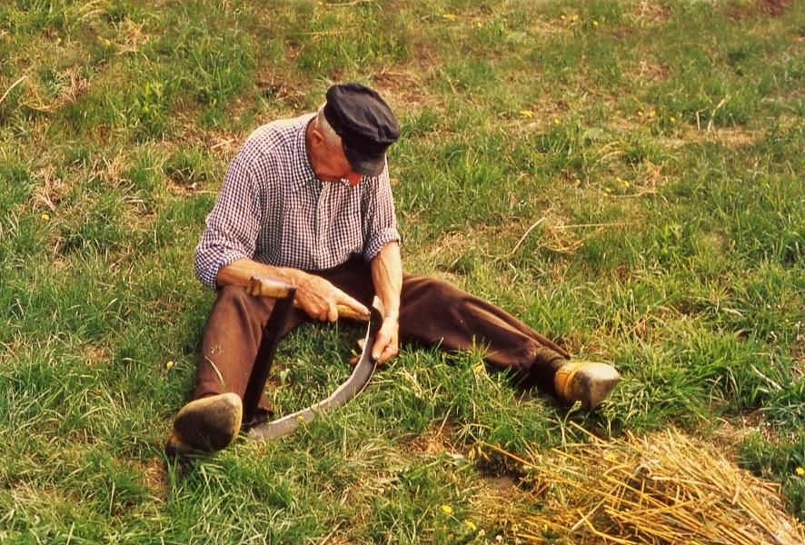 zeis haren wetten gras maaien