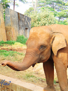 Elephant, ragunan zoo, collection