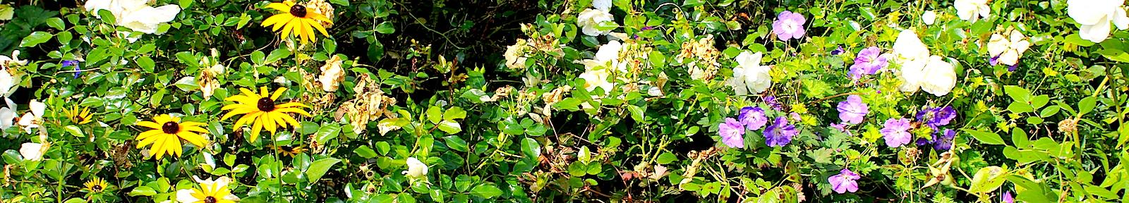 Октябрьские цветы ВелоМира