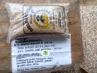 Benih padi yang dibeli BINTORO PERMADI Madiun, Jatim. (Sebelum packing karung ).