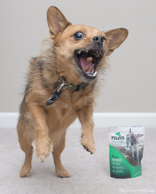 Mini Review: Nulo Freestyle Trainers Dog Treats