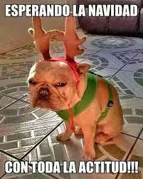 Perro cuernos reno Navidad cara enfadado