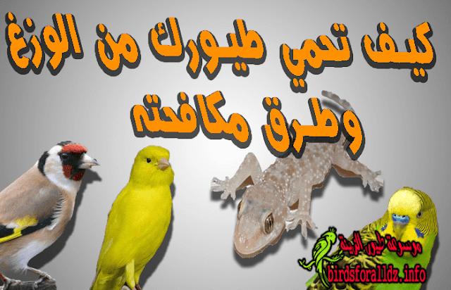 كيف تحمي طيورك من الوزغ (أبوبريص) و طرق مكافحته