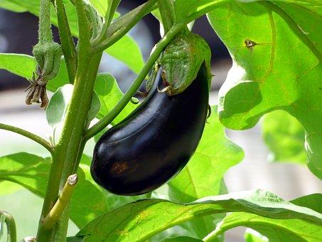 Cara Berkebun Sayur Mayur Agar Hasilnya Bagus