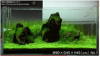 Aquatic Art: How much CO2 Amano put in his tank?