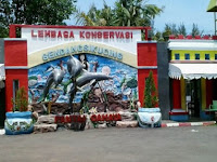 Pantai Cahaya Sikucing, Bermain Lumba-lumba Dipantai Cahaya