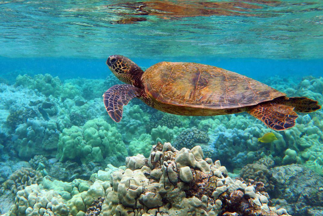Big Island Hawaii Top 5 Snorkeling Destinations in the World