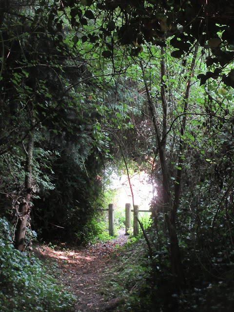 Hollow way, East Farndon