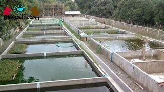 Pemilihan Lokasi Budidaya Ikan Nila