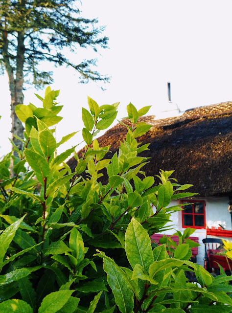 green, thatched cottage