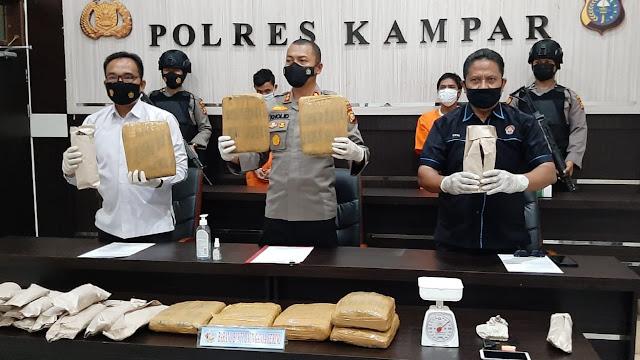 Kapolres Kampar Didampingi Kasatres Narkoba Ungkap Penangkapan 9,65 Kg Daun Ganja Kering
