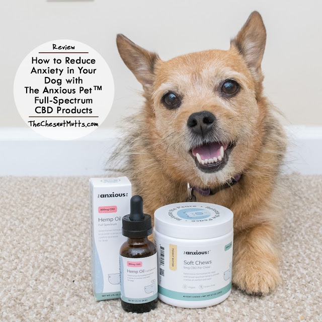 Review: How to Reduce Anxiety in Your Dog with The Anxious Pet™ Full-Spectrum CBD Products