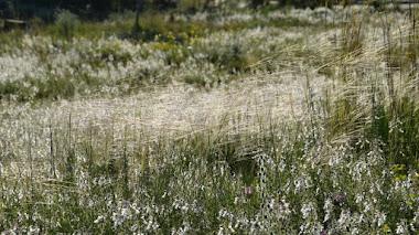 Un paseo por las plantas mediterráneas