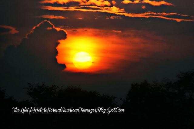 sunset | trisomy 13 | rosevinecottagegirls.com