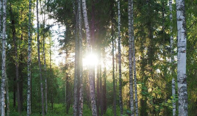 Potikortti mokilta, kesamokki, loma, rentoutuminen, jarvimaisema, ilta-aurinko, metsa, koivikko, rantakoivut