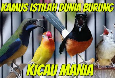 Kamus Istilah Kata Dalam Dunia Burung Untuk Para Kicau Mania
