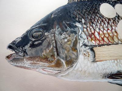 Détail de la tête noir et ocre du poisson Tepco
