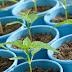 5 Tips to Start Your Indoor Garden