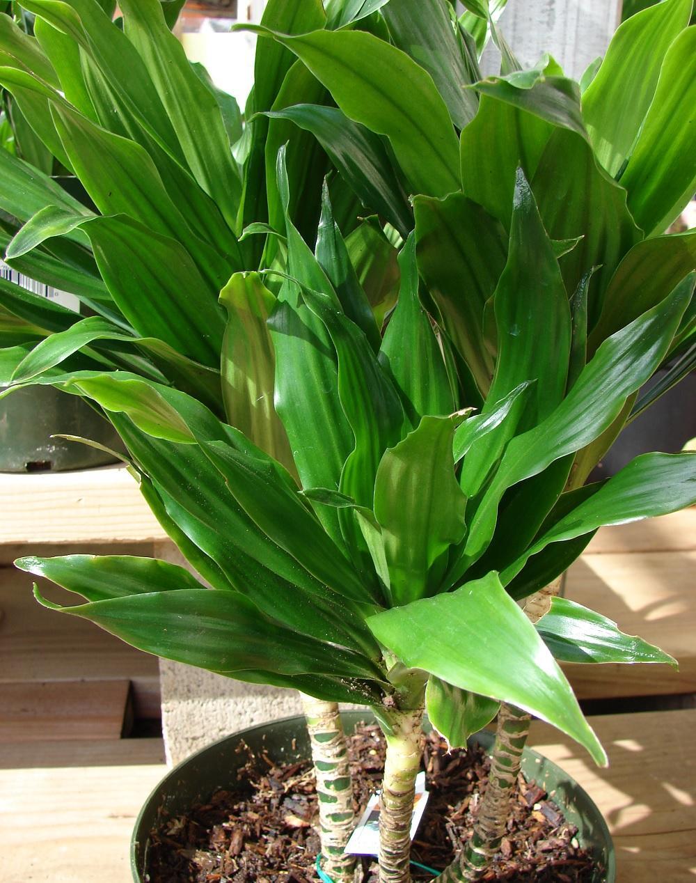 Variedad de hojas verdes