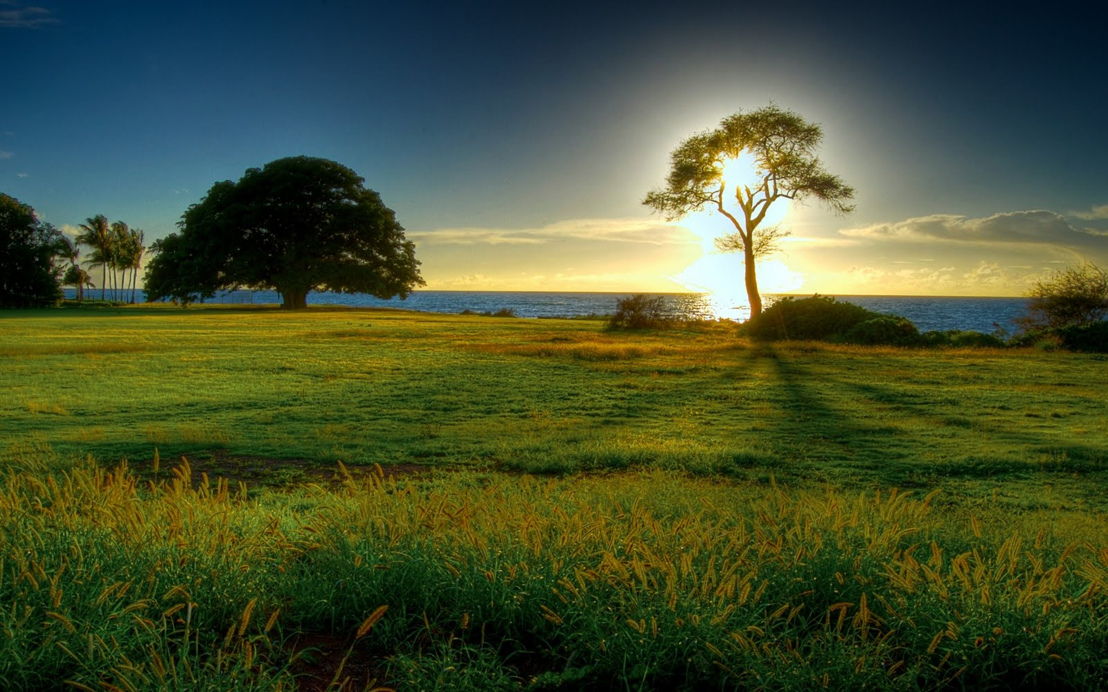 Backgrounds: Beautiful Nature