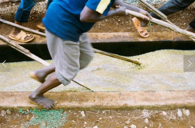 Gute Sodu - Ethiopian Coffee And Wanjegi Ab - Kenya Coffee