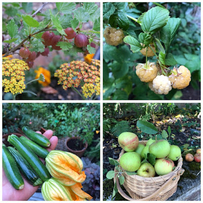 four photos home grown red gooseberries, white raspberries, courgettes, apples