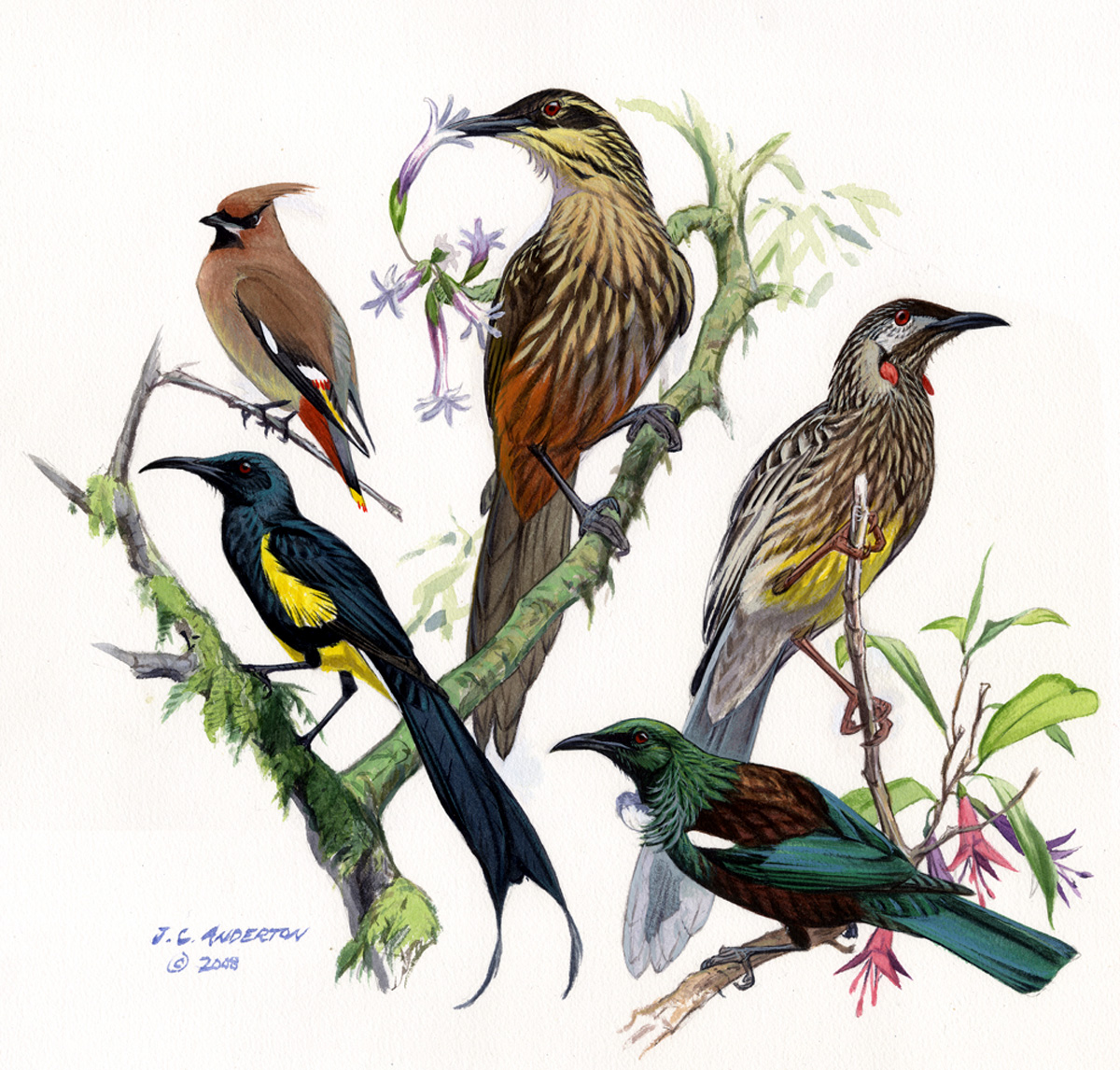 Species New To Science Ornithology Convergent